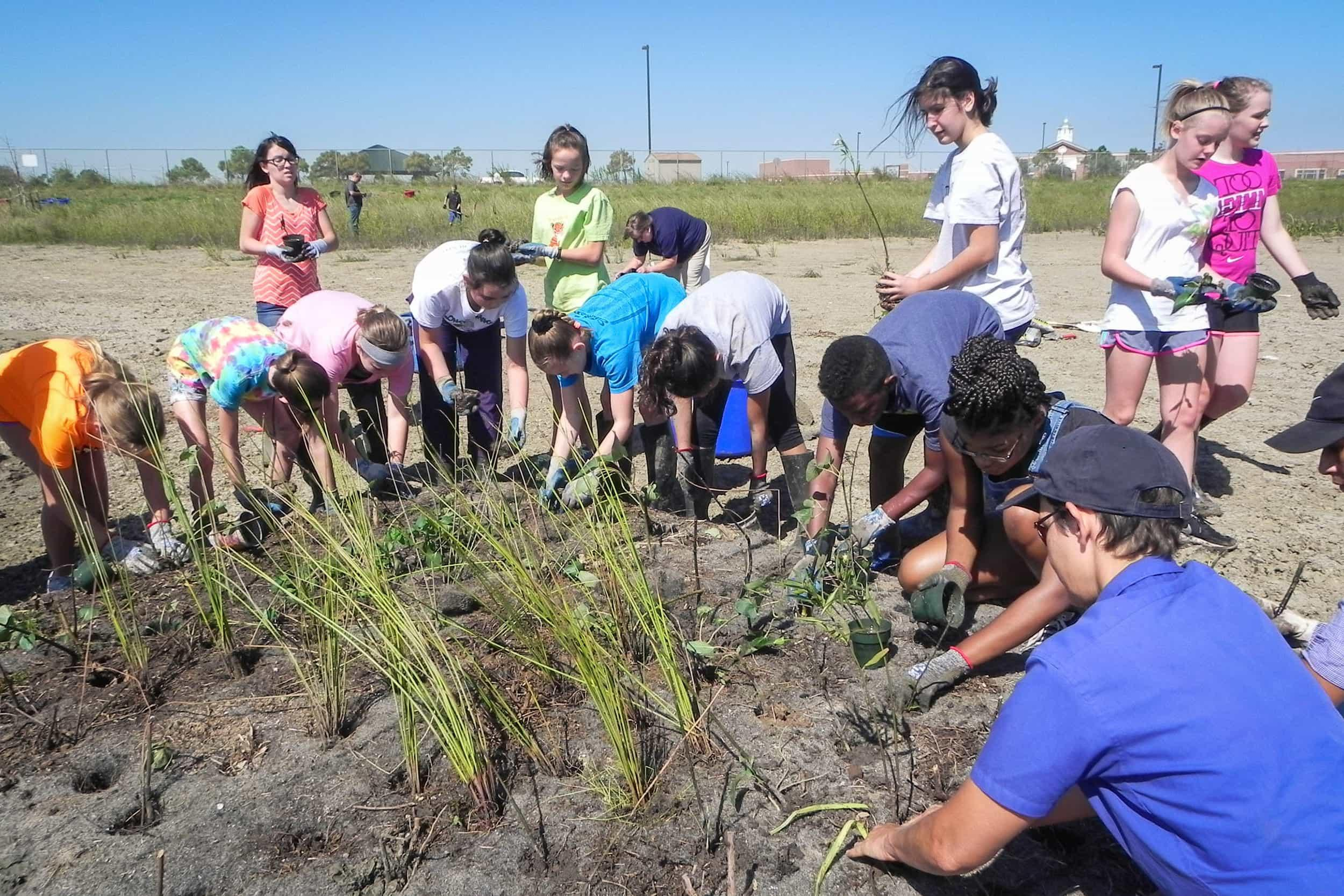 CCISD students and volunteers plant the floating wetlands