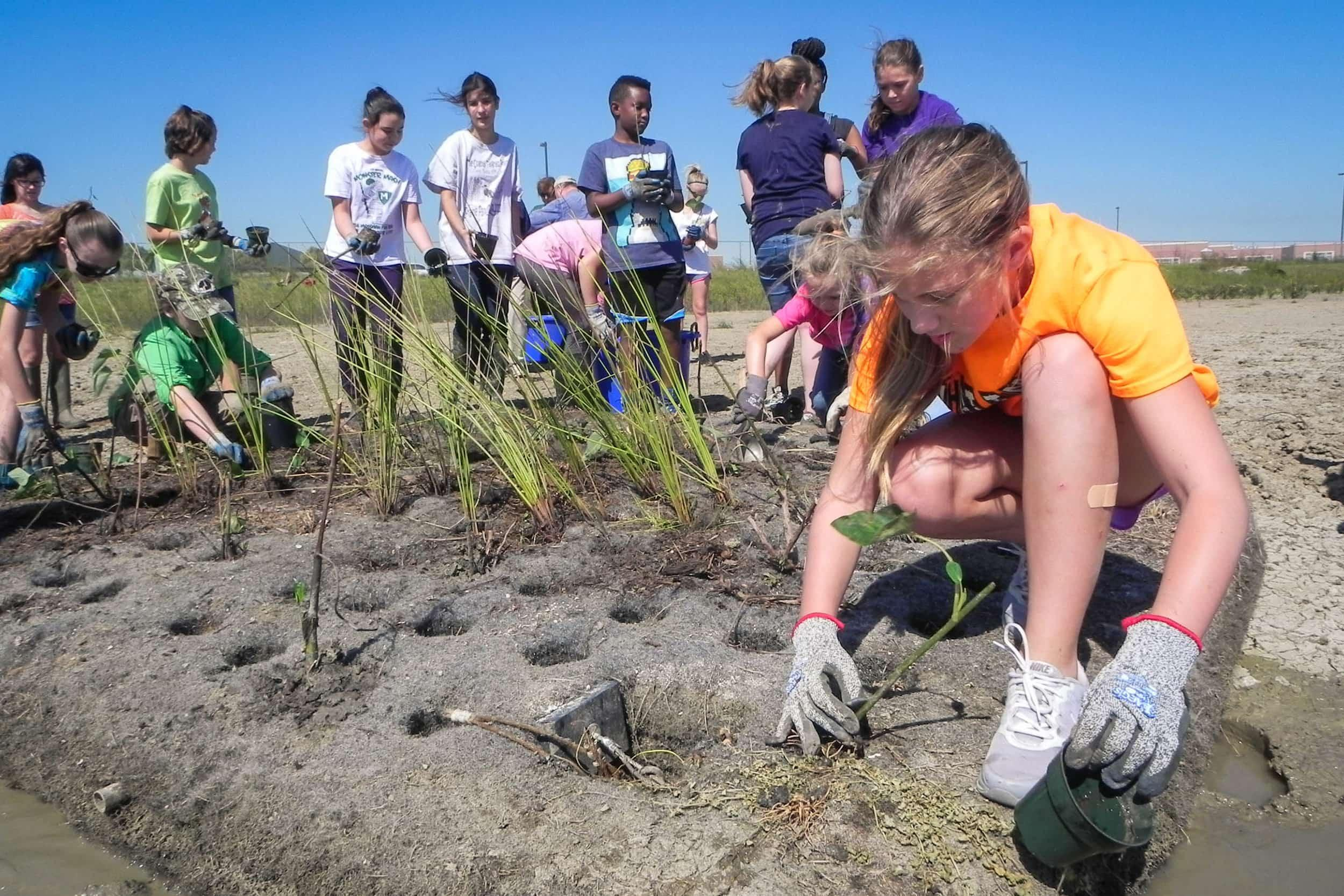 Students and volunteers plant the floating wetlands