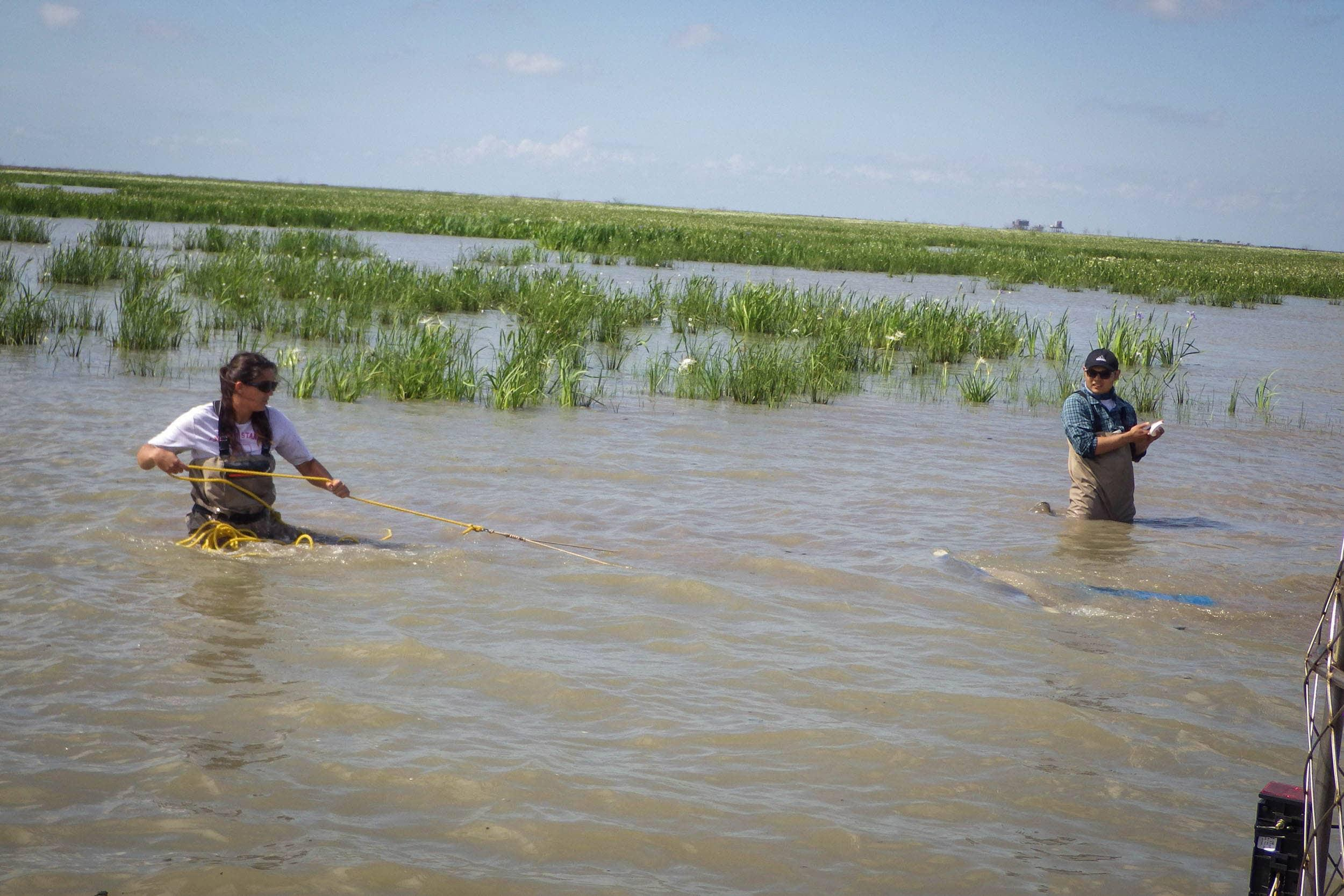 Nicole Morris uses an epibenthic sled to collect fish and crustaceans at a sampling site in the Trinity River Delta.