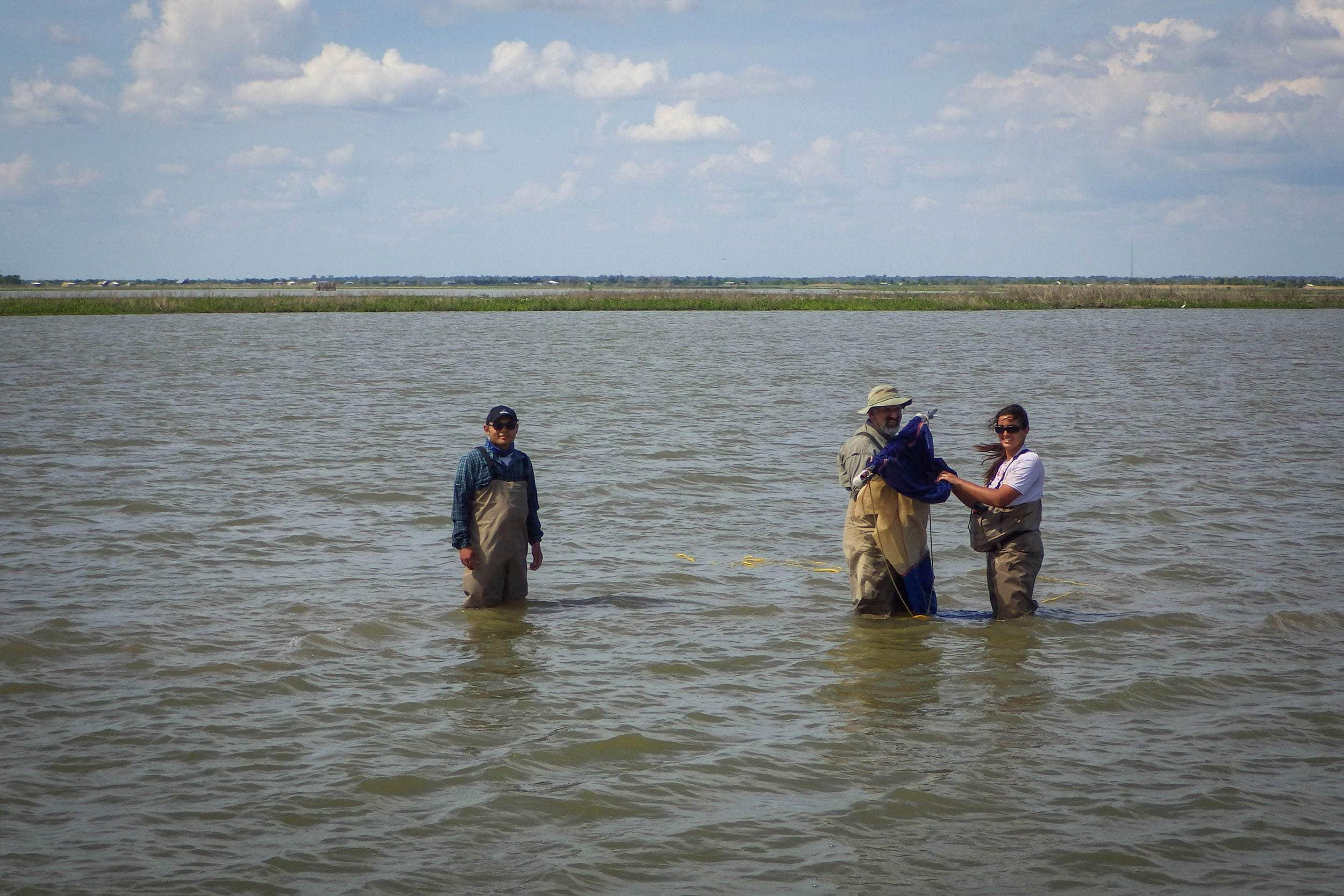 Raul Sarmiento, Dr. George Guillen, and Nicole Morris collect nekton at a sampling site in the Trinity River Delta