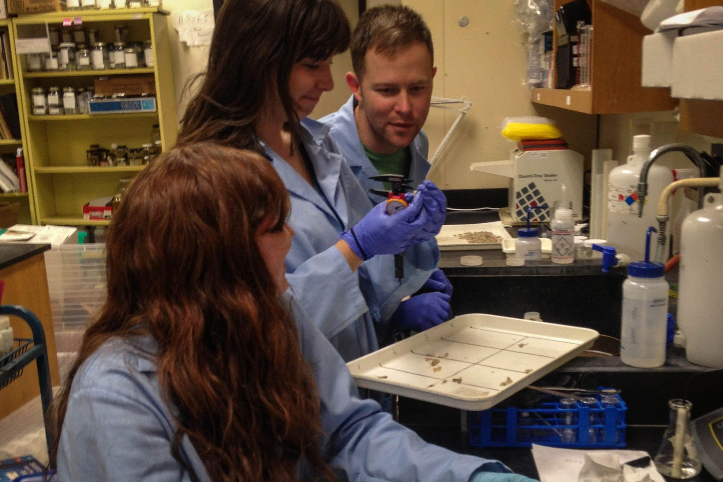 Aquatic scientist Stephen Curtis oversees the identification of fish in EIH's laboratory.
