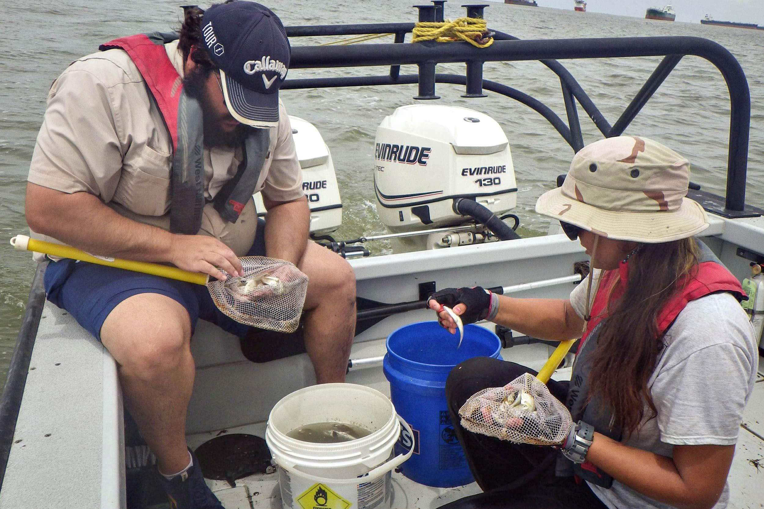 EIH research assistants Bryan Alleman and Nicole Morris sort fish caught in a trawl in Galveston Bay while sampling for the NCCA.