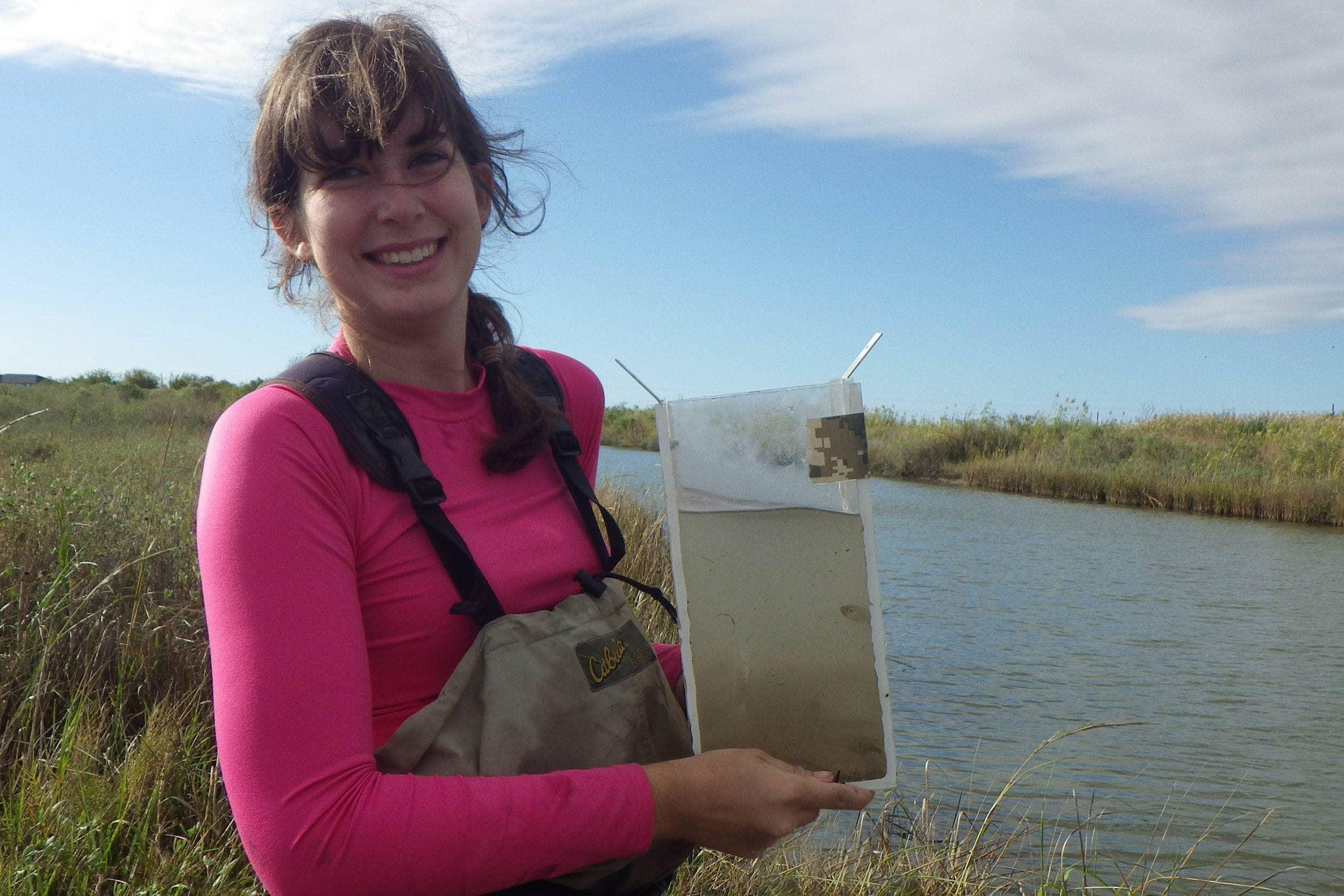 Josi Robertson, research assistant, samples for saltmarsh topminnows with a Breder trap.