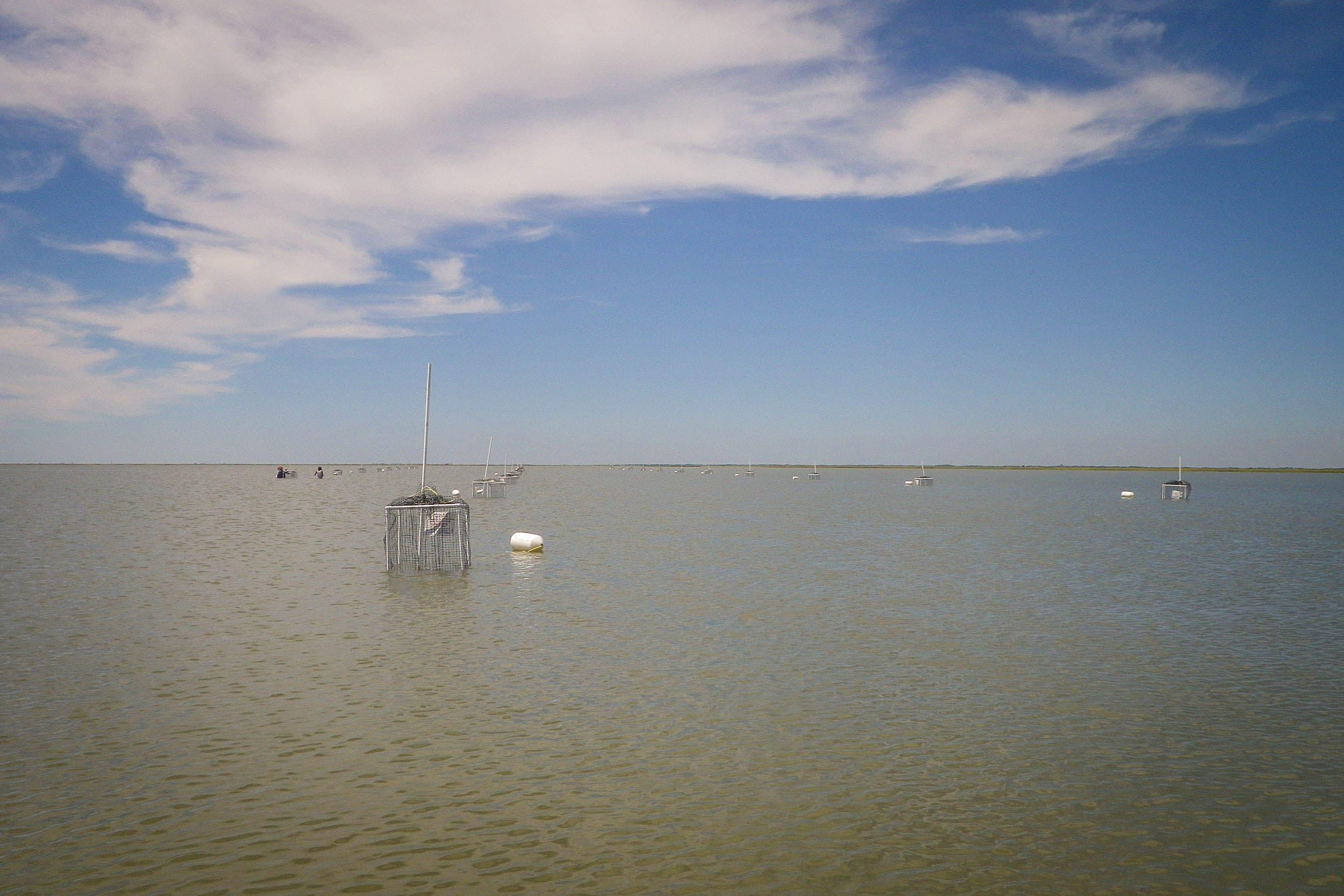 An array of modified crab traps deployed in open water