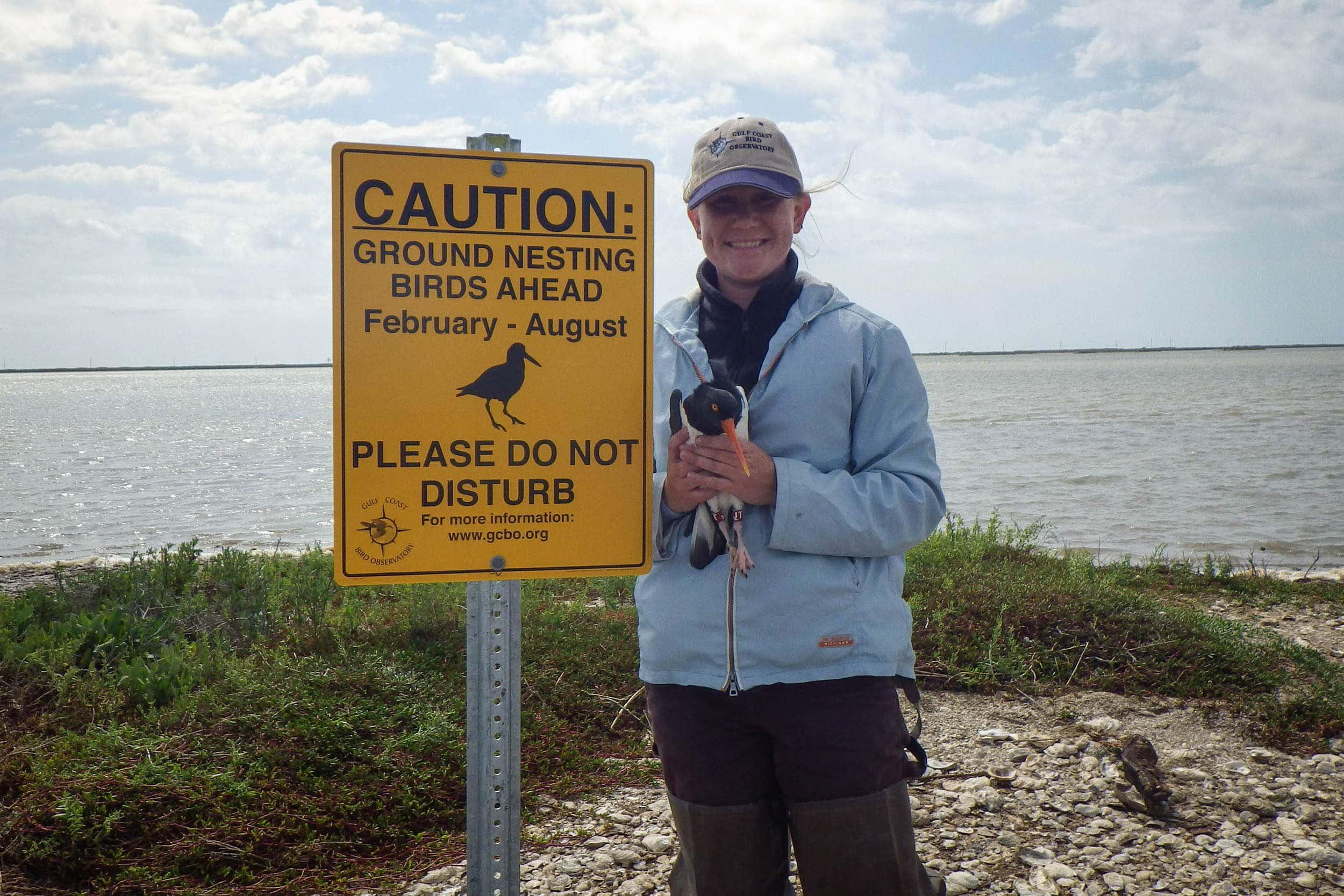 EIH research assistant Amanda Anderson with an American oystercatcher (Haematopus palliatus). Warning signs were placed on shell islands to warn people of nesting sites.