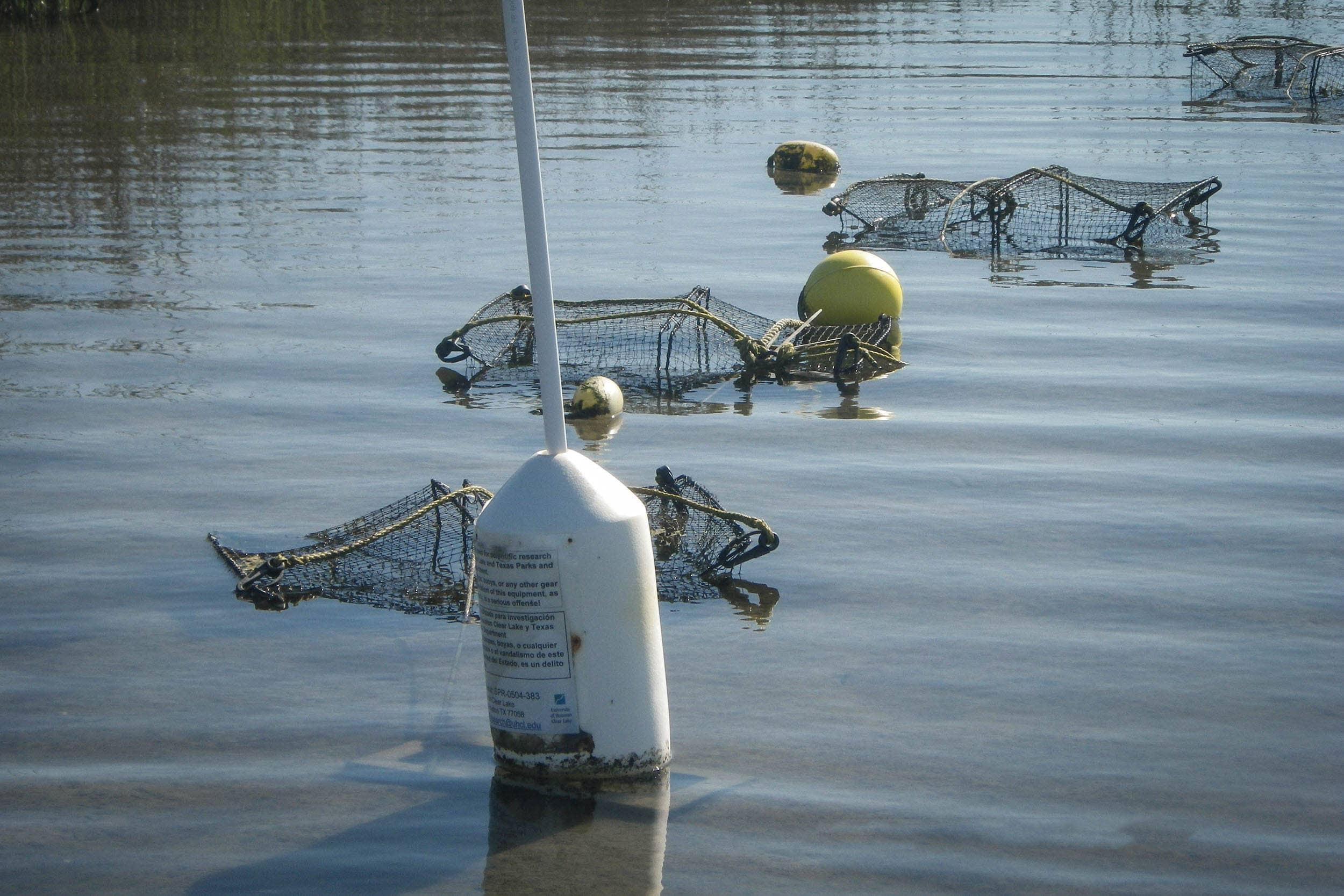 Deployed Crab Traps