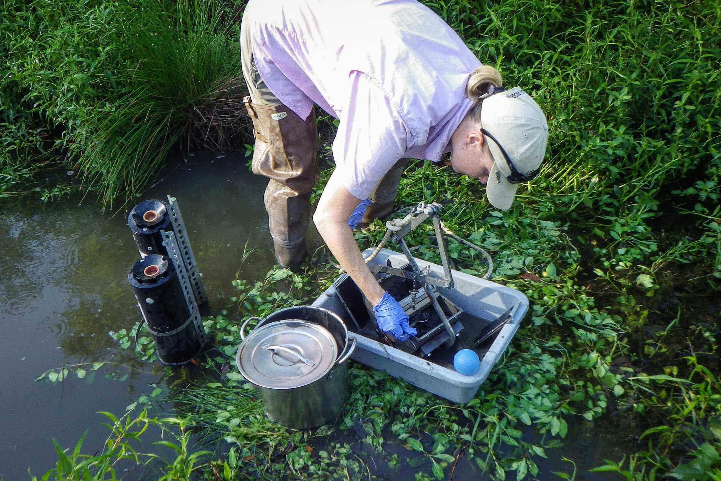 Jenny Oakley, environmental scientist, takes sediment samples for heavy metal testing at the created wetland site.