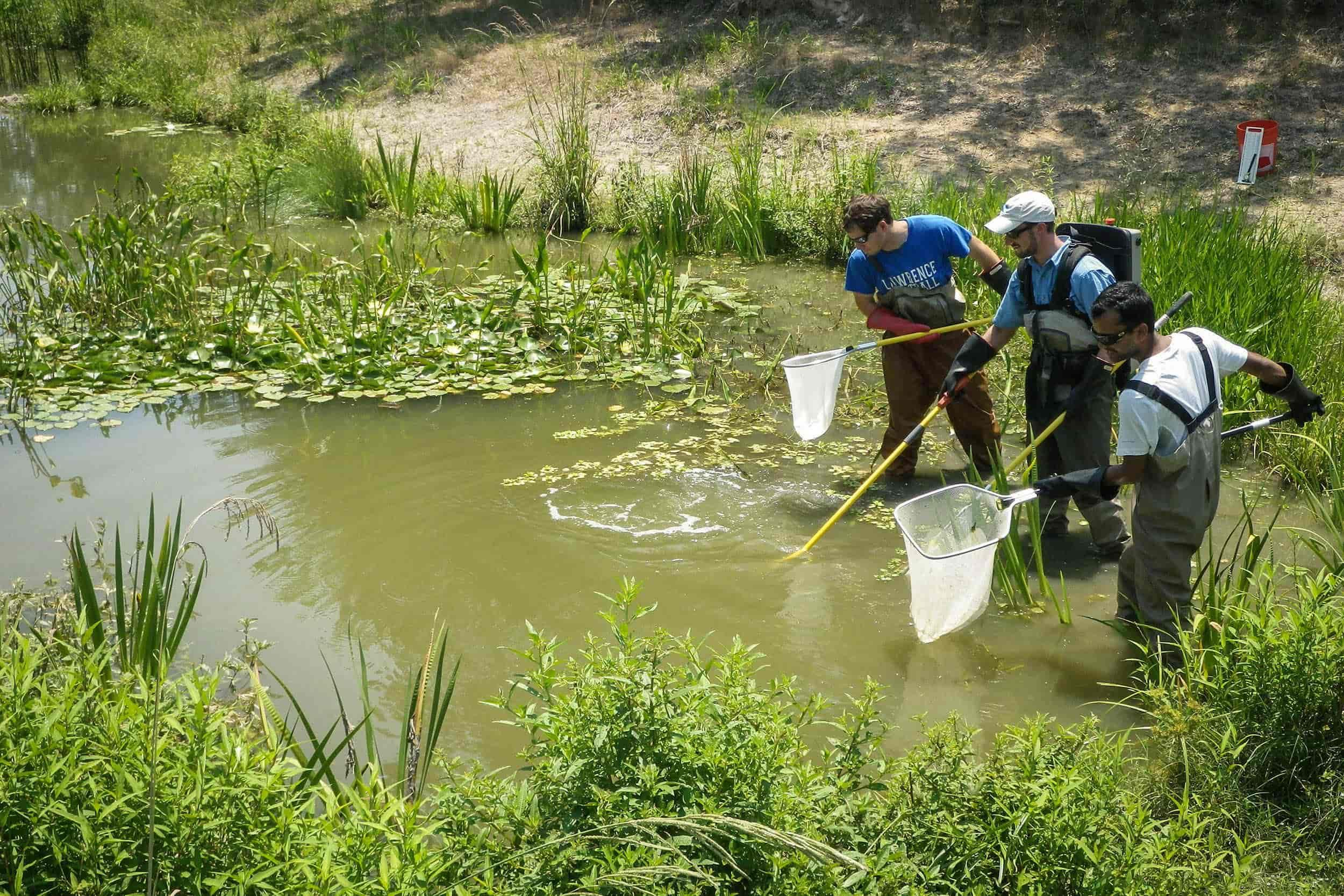 Research assistants Alex Miller, Greg Knothe, and Khem Paudel utilize backpack electroshocking equipment to conduct a biological survey at the created wetland site.