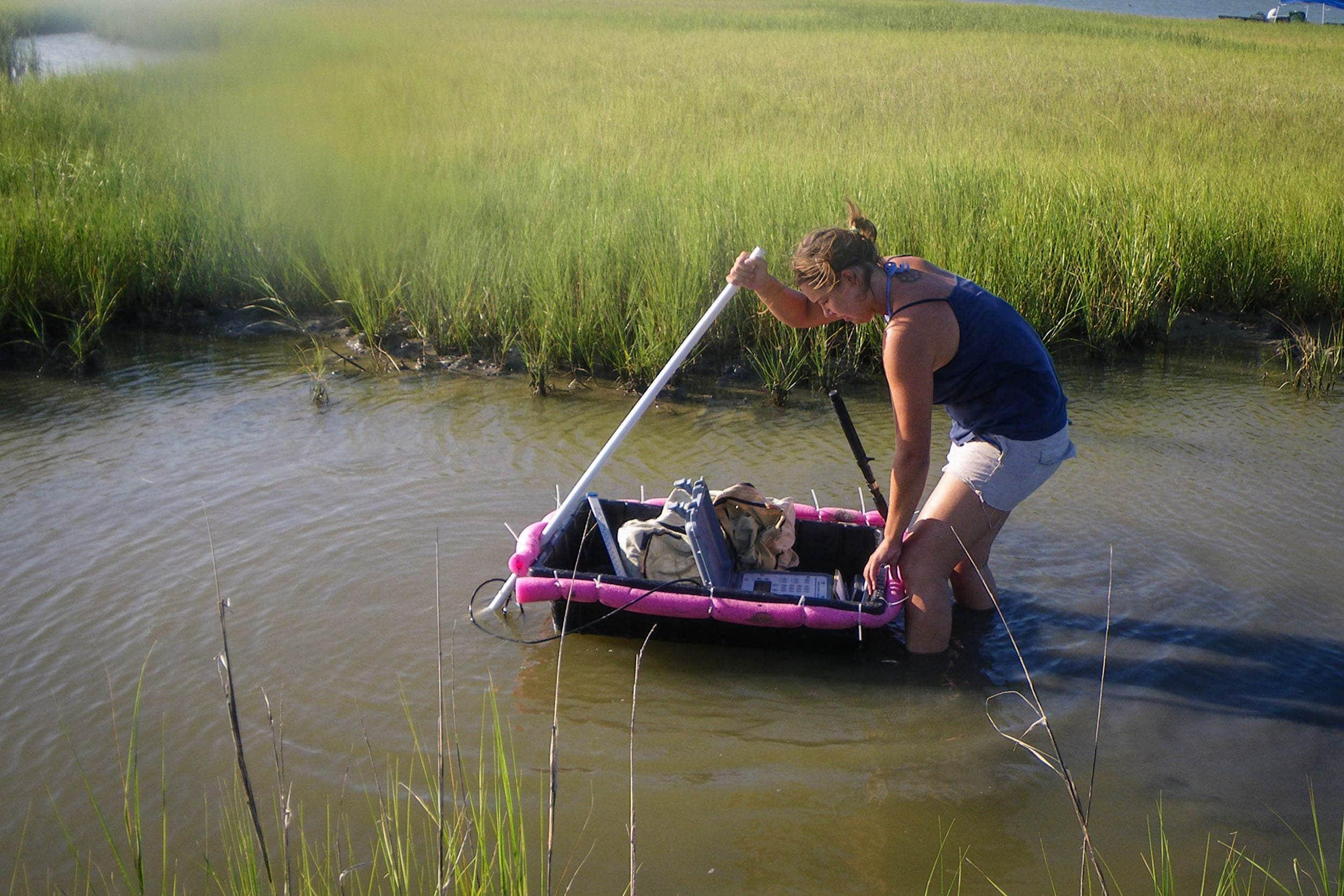 Emma Clarkson, research assistant, uses acousting tracking to locate tagged diamond-backed terrapins