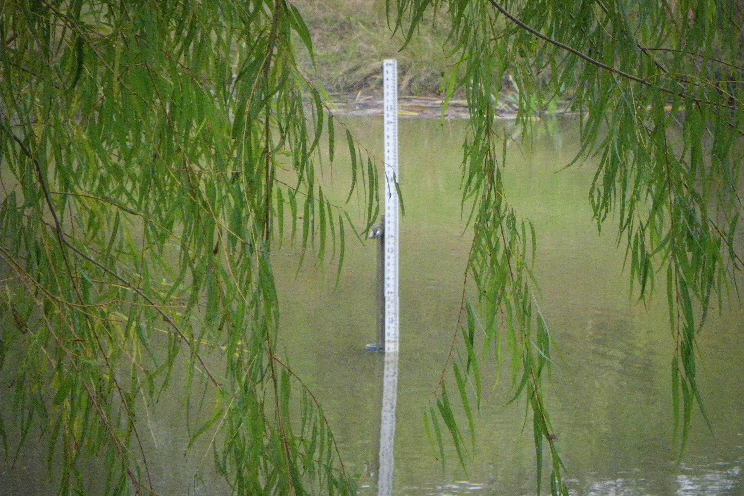 Gauging meter in pond 2 at Mason Park