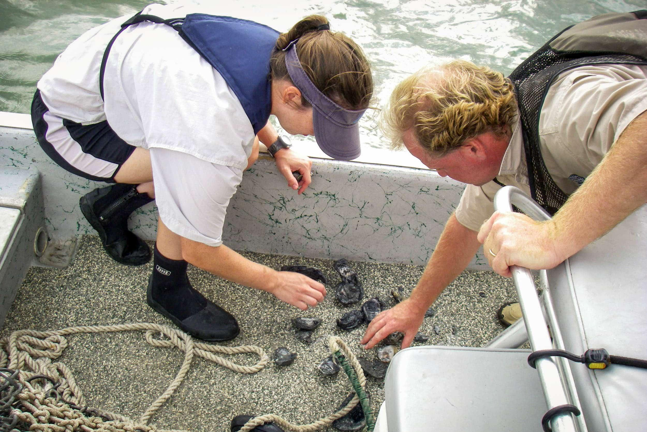 Danielle Crossen, research assistant, and Glen Sutton, TPWD biologist, sort oysters collected in Galveston Bay