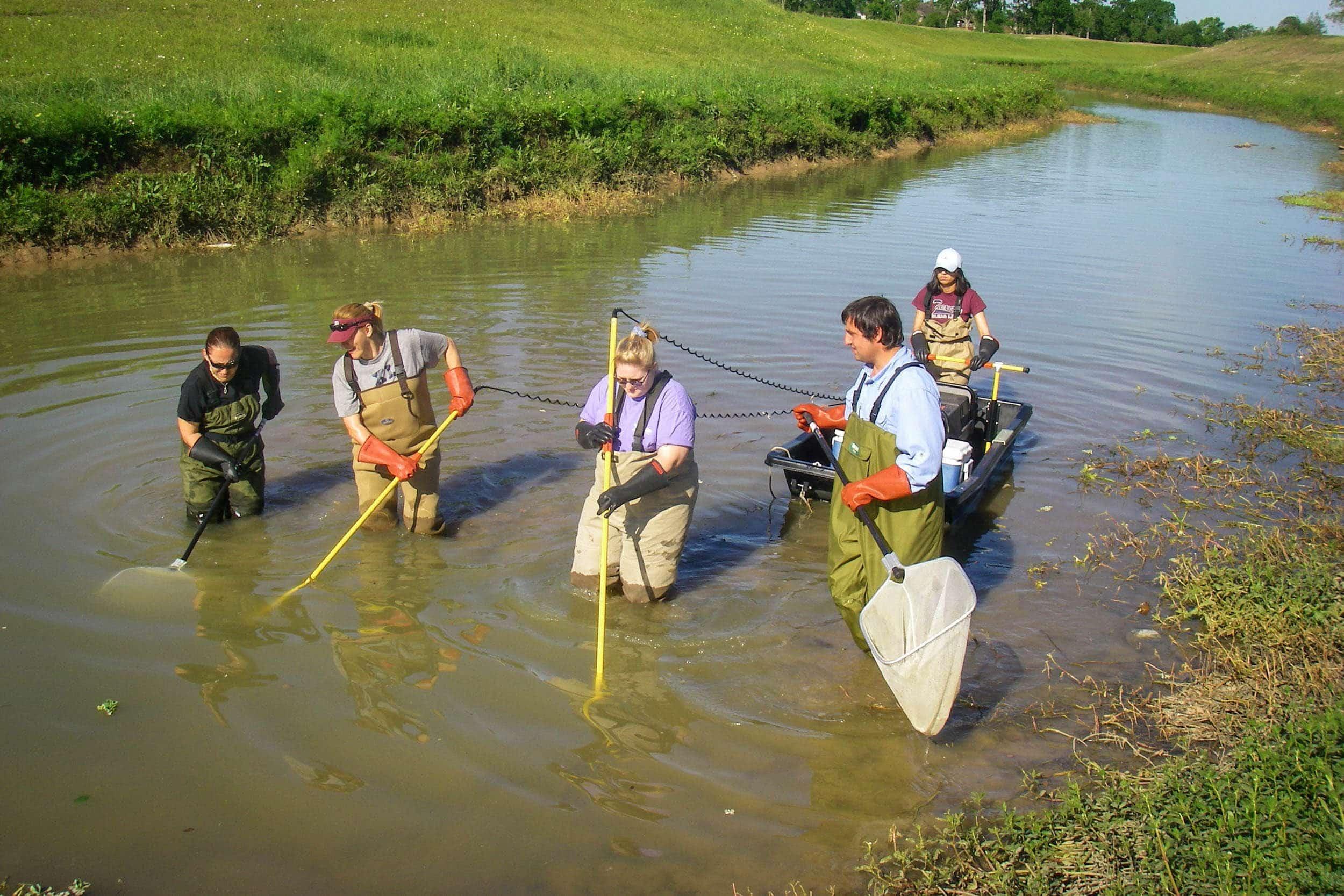 Sampling in Horsepen Bayou are research assistants Kate Leathers, Jayne Vidas, Nicole Fearnley (undergraduate student), Michael Franks and Priyanka Lokanath