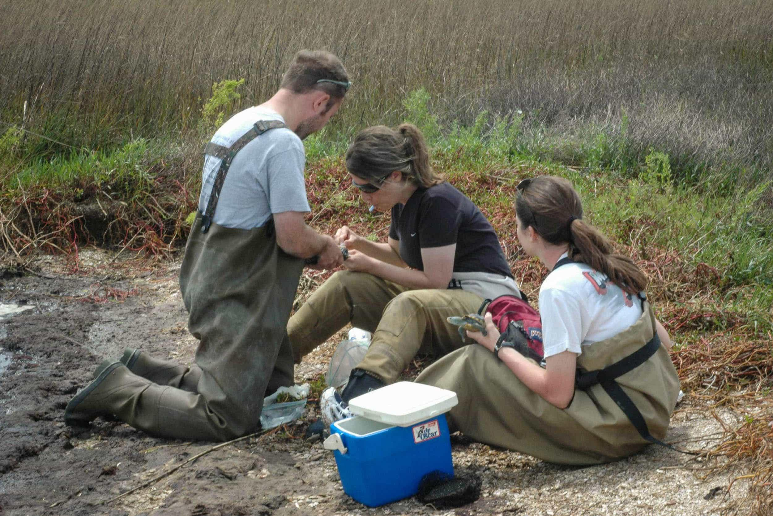 Paul Crump (Houston Zoo), Rachel Rommel (Houston Zoo), and Kelli Haskett (EIH research assistant) prepare to draw blood from two male terrapins.