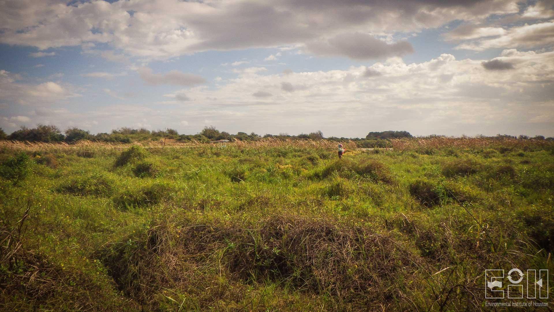 Biological Monitoring of the Tres Palacios River and Upper Tres Palacios Bay, Texas